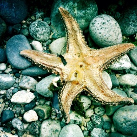 running dried starfish Sunshine Coast, just reminiscing about this magical place