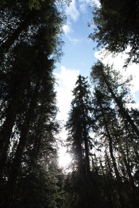 forest sun sky