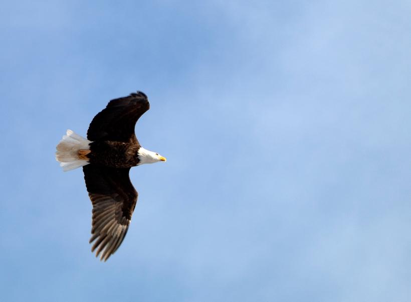 eagle_cu_flight